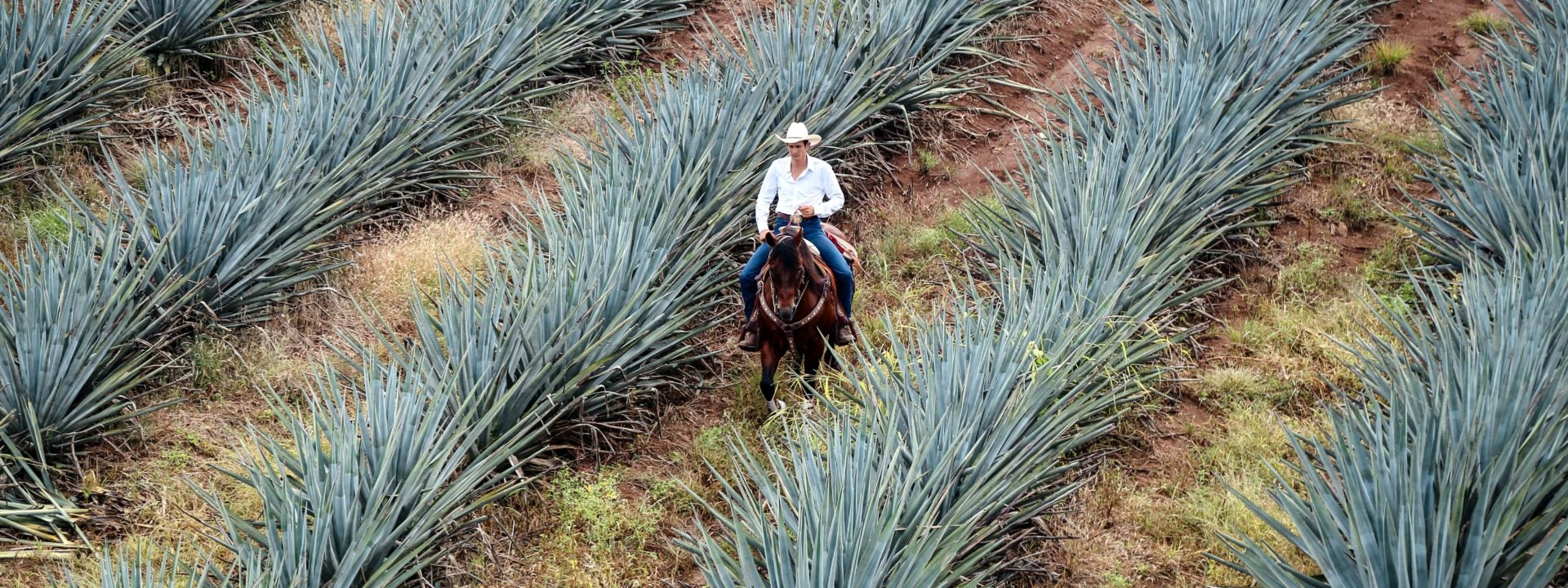 Everything you need to know about tequila (and the best ways to enjoy it)